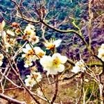 visanavijapan free consultation 2016 spring
